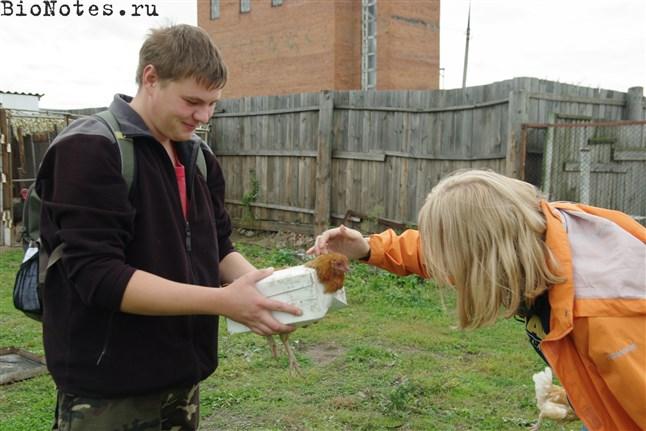 Гладим пойманную курицу