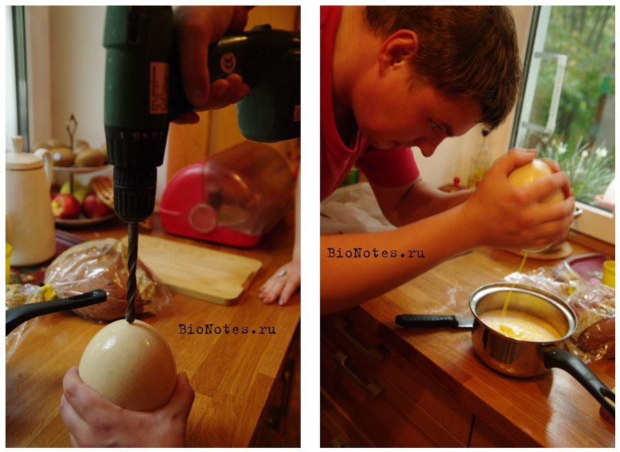 как_готовить_страусиное_яйцо