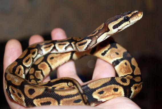 Змея на руке