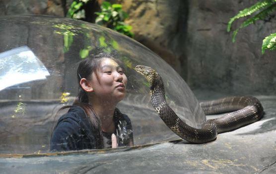 Змея-в-зоопарке