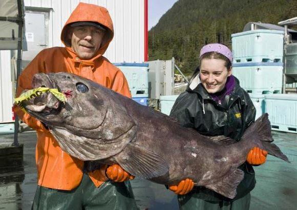 Морской монах рыба
