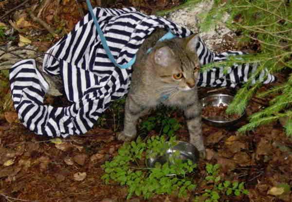 Кошка в тельняшке