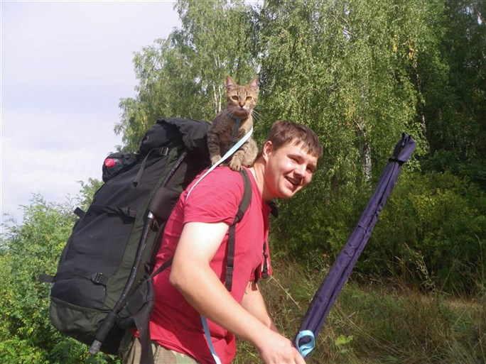 Кошка Африка предпочитает путешествовать с комфортом