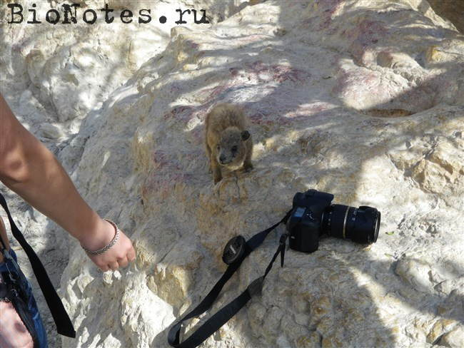 Даман и фотоаппарат