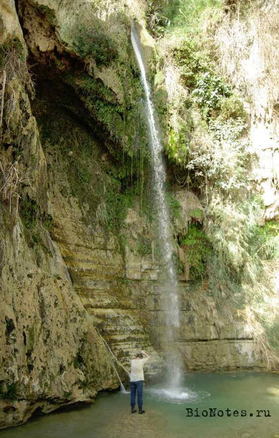 Водопад Давида, Израиль, Эйн-Геди