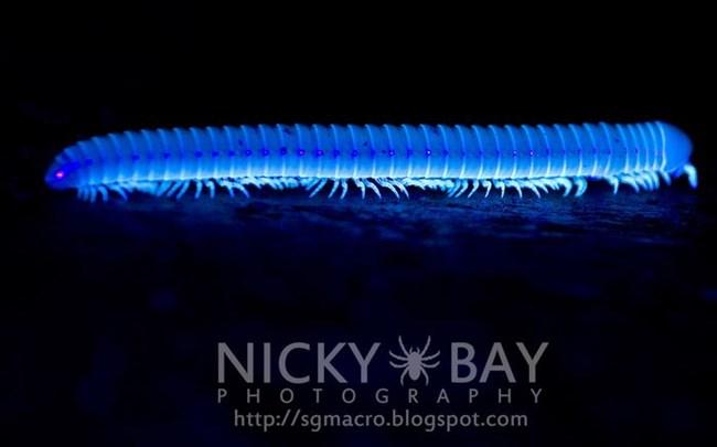 Ультрафиолет свечение насекомых